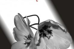 Walcz ze mną – tom 2 nowej serii erotycznej AMBERA