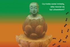 Marna karma Davida Safiera – bestseller wydany w 31 krajach 18 listopada w AMBERZE
