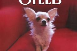 Czysta radość, czyli moje kochane psy – AMBER poleca najbardziej uroczą książkę Danielle Steel