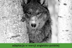 """Wydawnictwo 44.pl poleca adaptację powieści Jacka Londona """"White Fang. Biały Kieł""""  w serii """"Czytamy w oryginale"""""""