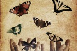 Świat motyla – tomik poezji autorstwa Hanny Jackowskiej