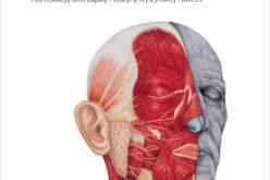 Wybrane zagadnienia z onkologii głowy i szyi. Podręcznik dla lekarzy i studentów