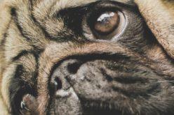 Pies i ty – Jolanta Tochowicz-Ertman
