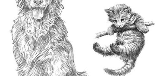 Sztuka rysowania – nowe książki w serii