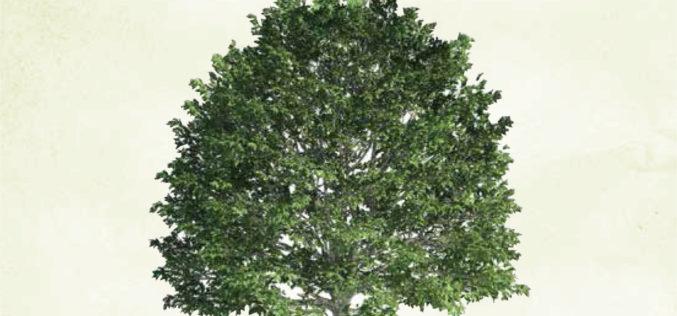 Sekretny język drzew – nowość w Amberze!