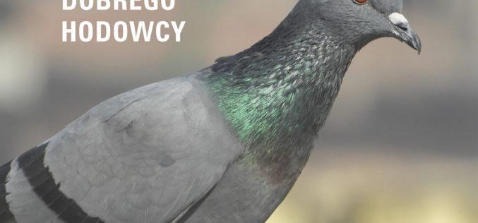 Gołębie. Poradnik hodowcy
