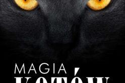 Magia kotów